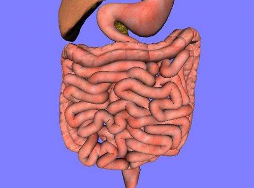 Топ-25: интересные факты про систему пищеварения, о которых знают не все