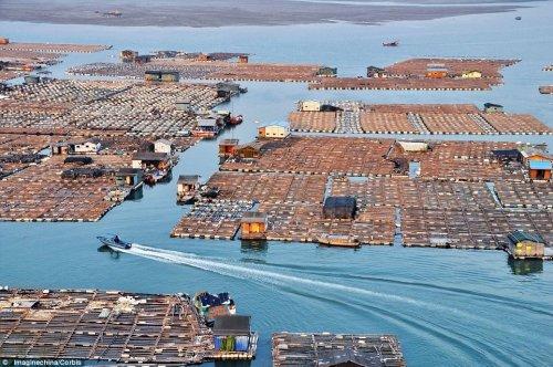 Китайские плавучие рыбные фермы (12 фото)