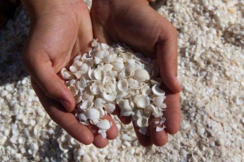 Белоснежный пляж в Австралии, покрытый миллиардами ракушек (5 фото + видео)