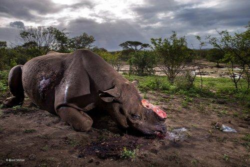 25 лучших фотографий живой природы, победивших в конкурсе Wildlife Photographer of the Year 2017