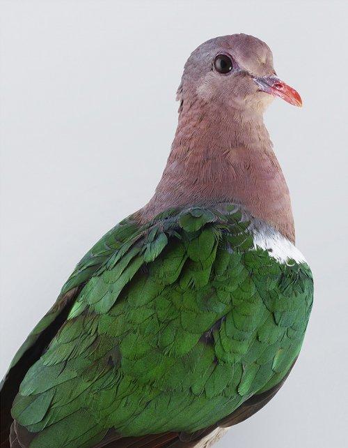 Разнообразие и красота птиц в фотографиях Лейлы Джеффрис (12 фото)
