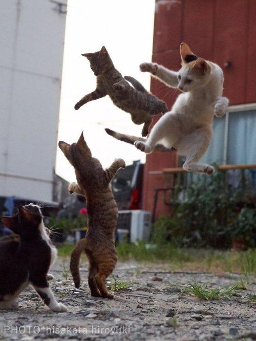Кошки, в совершенстве владеющие боевыми искусствами (31 фото)