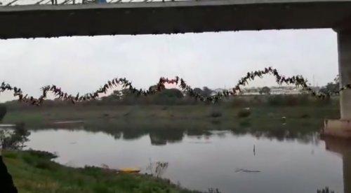 245 роупджамперов одновременно спрыгнули с моста в попытке установить новый мировой рекорд