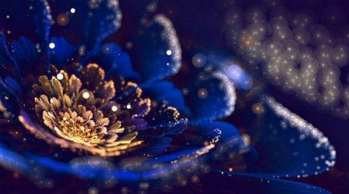 Цветочные фракталы Сильвии Кордедды (30 фото)