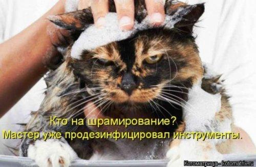 Лучшая котоматрица за неделю (29 фото)