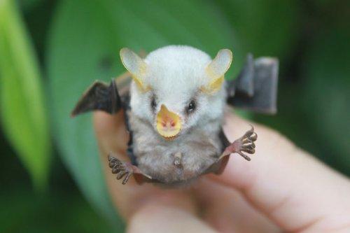 Фотографии с летучими мышами для тех, кто считает их зловещими существами (31 фото)