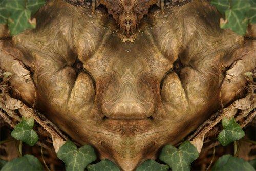 Зеркальные отражения коры деревьев в фотопроекте Элидо Турко (27 фото)