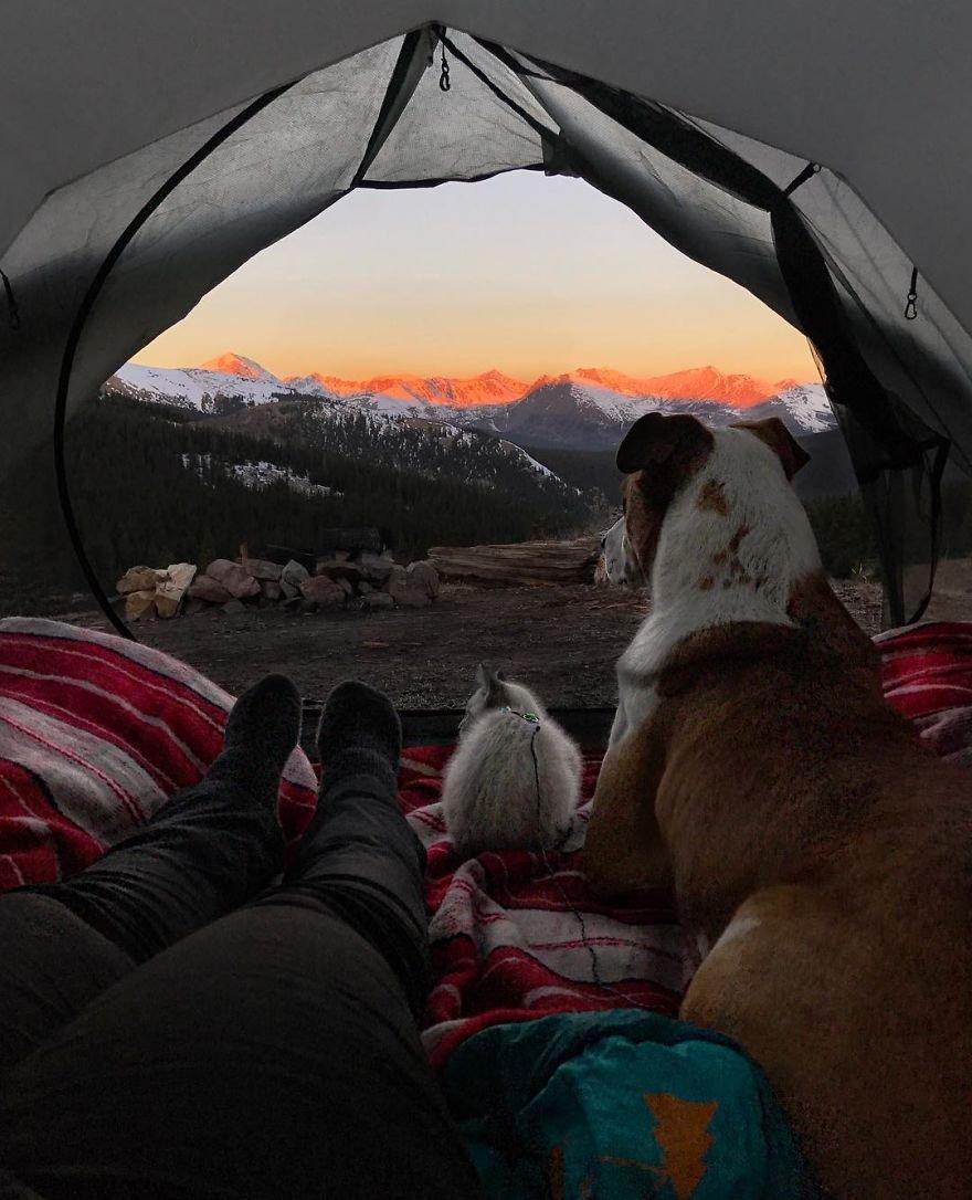 фото кота и пса путешествия нашем сайте объявлений