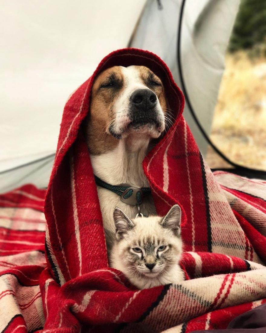 Картинки собаками и котами