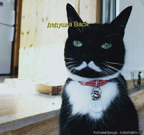 Новая котоматрица на Бугаге (27 фото)