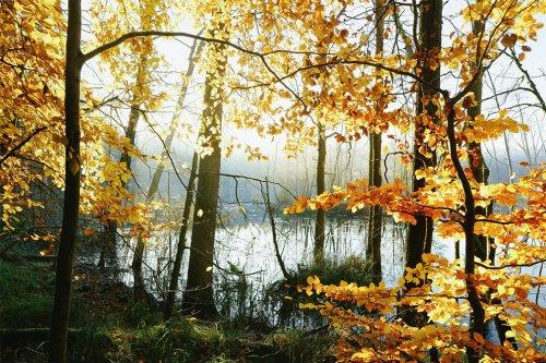 Осень на озере в фотосерии Килиана Шёнбергера (10 фото)