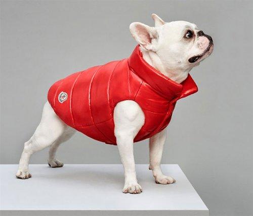 Итальянский бренд Moncler выпустил коллекцию курток для собак (8 фото)
