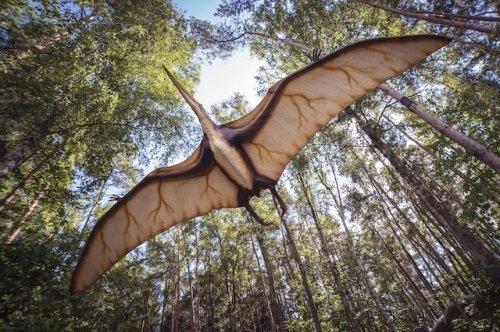 ТОП-10: Невымершие мифы о динозаврах