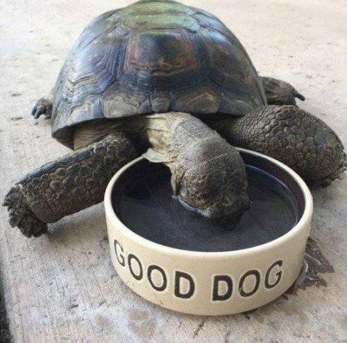 Забавные животные, которые подарят вам хорошее настроение (25 фото)