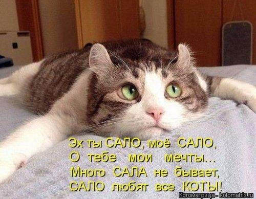 Новая котоматрица для настроения (30 фото)