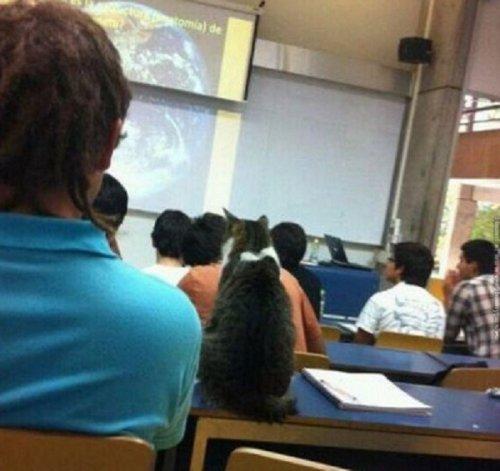 Кошки, которые тянутся к знаниям (11 фото)
