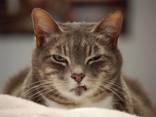 Кошки с осуждающим взглядом, который просто невозможно вынести (16 фото)