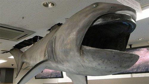 ТОП-25: Самые ужасные морские монстры, о существовании которых вы могли не знать