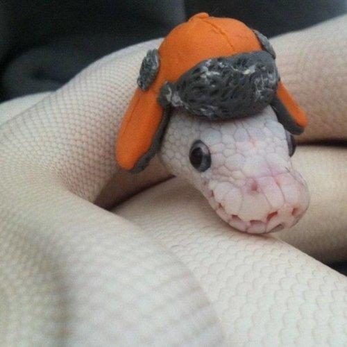 Фотографии с очаровательными змеями, которые помогут вам преодолеть страх перед ними (23 фото)