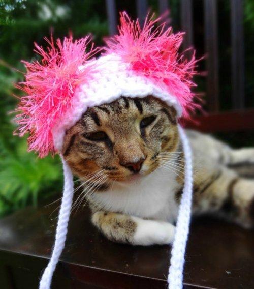 Яркие и разноцветные вязаные шапочки для кошек (15 фото)