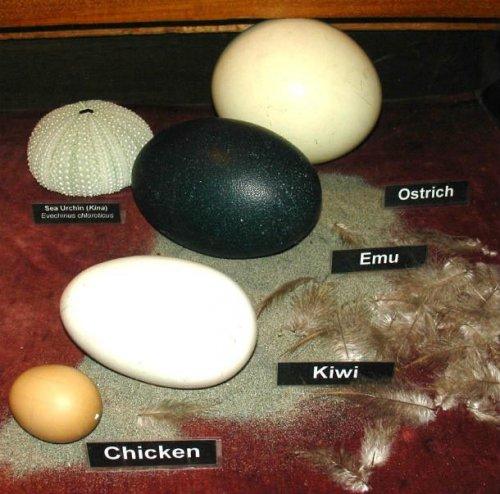 ТОП-25: Удивительные факты про яйца, которые вы могли не знать