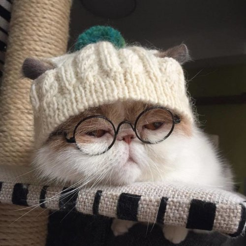 Стильная кошка Буона из Японии (25 фото)