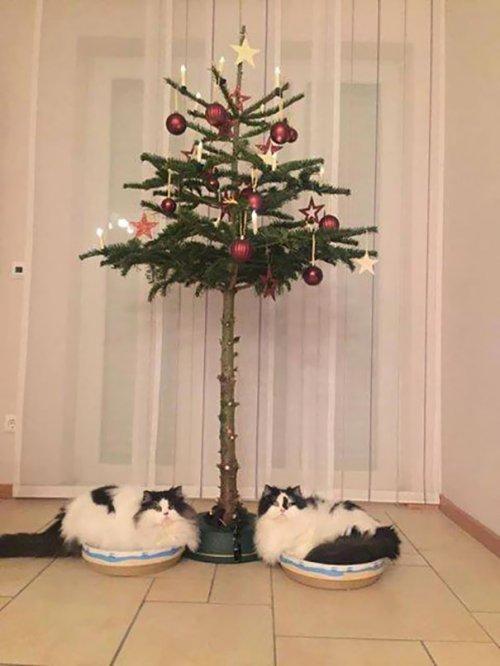 Как защитить новогоднюю ёлку от домашних животных (33 фото)