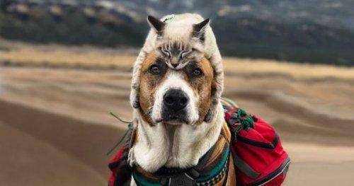 Любители путешествий пёс Генри и кот Балу (21 фото)