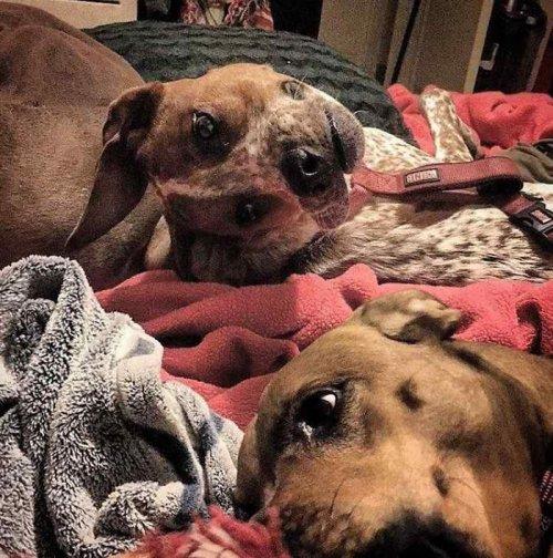 Вирусная фотография со странной собакой (3 фото)