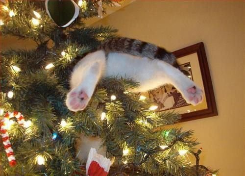 Главное украшение новогодней ёлки — это кошка! (15 фото)