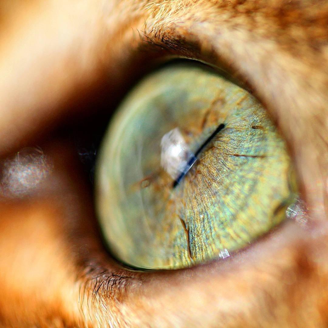 Как сделать глаза как у кошки макияж Визаж и здоровье глаз 51