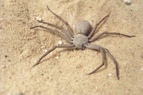 ТОП-25: Самые ядовитые пауки, существующие на самом деле