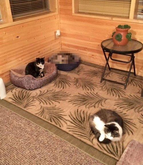 Добросердечная женщина приютила на крыльце трёх бездомных кошек, и одна из них оказалась совсем не кошкой (5 фото)