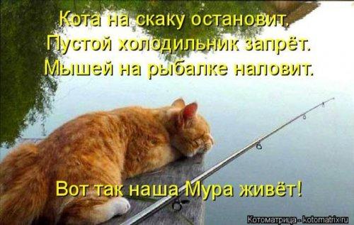 Новая котоматрица (24 фото)