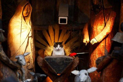 Кошки-разрушительницы рождественских вертепов (28 фото)
