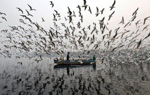 Самые популярные фотографии года по версии новостного агентства Reuters (29 фото)