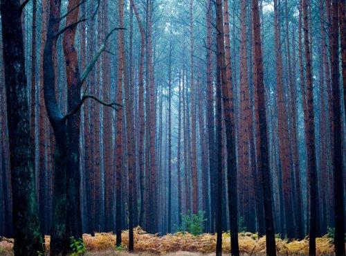 Волшебство леса в коллекции изумительных фотографий со всего света (20 фото)