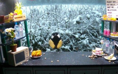 Кормушка для птиц, из которой ведётся прямая трансляция (7 фото)