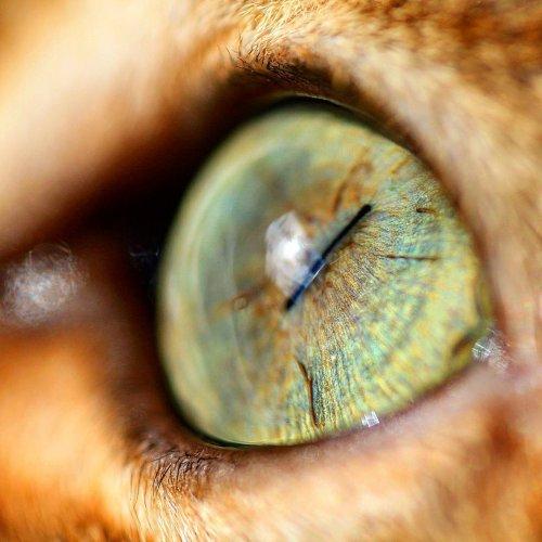 Мистическая красота кошачьих глаз в макрофотографиях (9 фото)