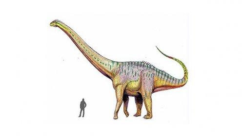 Топ-25: крупнейшие доисторические животные, когда-либо обитавшие на нашей планете
