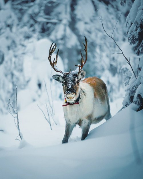 Парень делает волшебные фотографии обитателей финских лесов (15 фото)
