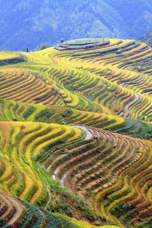 Удивительные рисовые террасы Луншэн (35 фото)