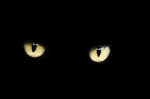 ТОП-25: Абсолютно замуррчательные факты о черных кошках