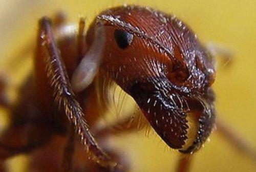 Топ-10: самые жуткие и опасные насекомые в мире