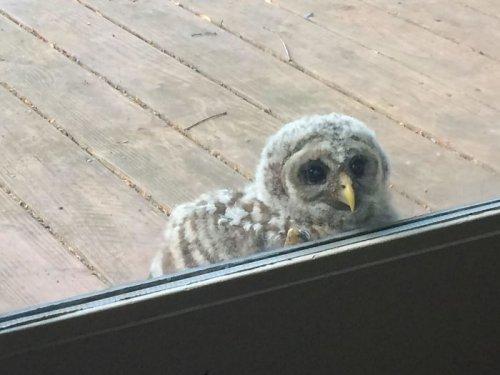 Необычные пернатые гости по ту сторону окна (27 фото)
