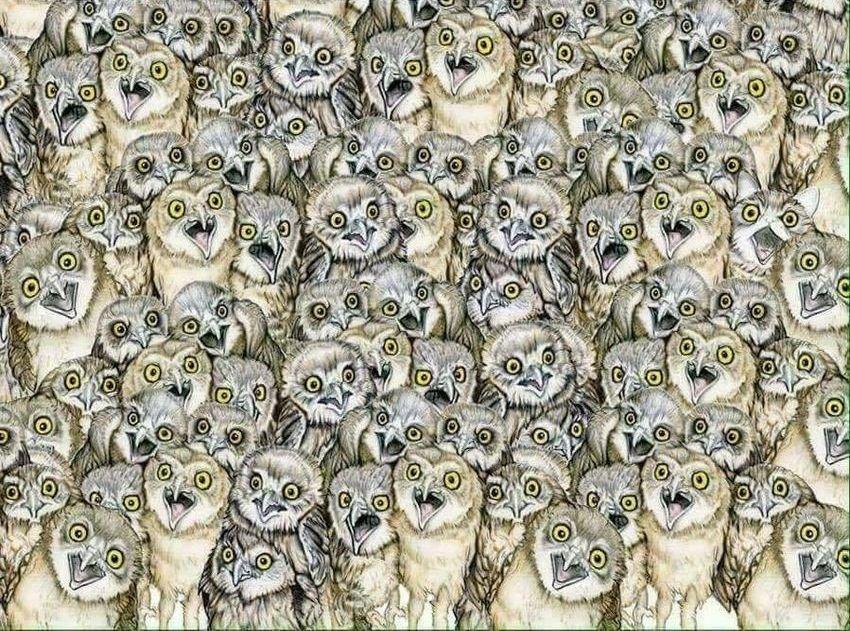 картинки с скрытым изображением животных этот день отовсюду
