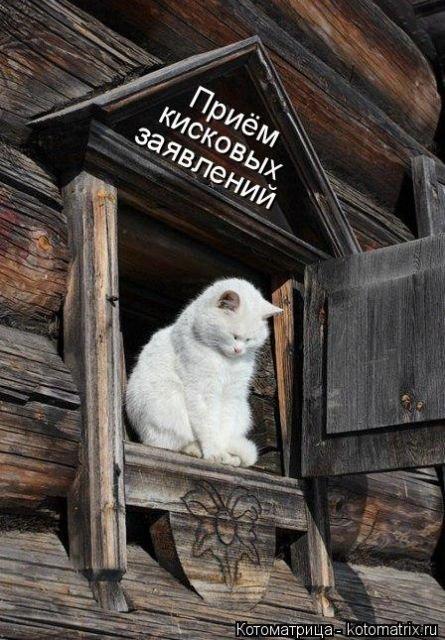 Свежая котоматрица для всех (40 фото)