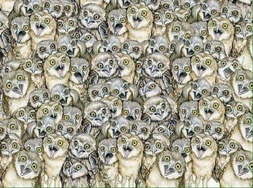 Картинка-загадка: найдите здесь кошку (4 фото)