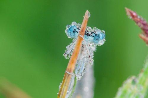 Невероятные фотографии насекомых в каплях утренней росы