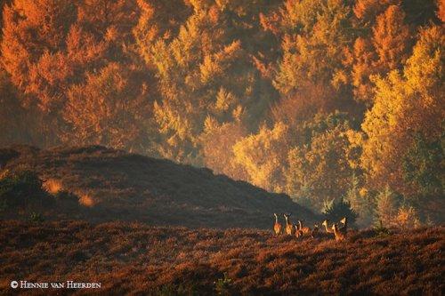 Дикие животные в фотографиях Хенни ван Херден (11 фото)